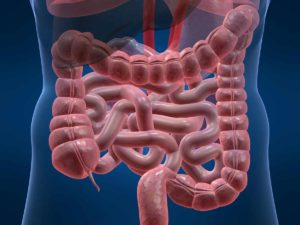 Image of gut and intestines
