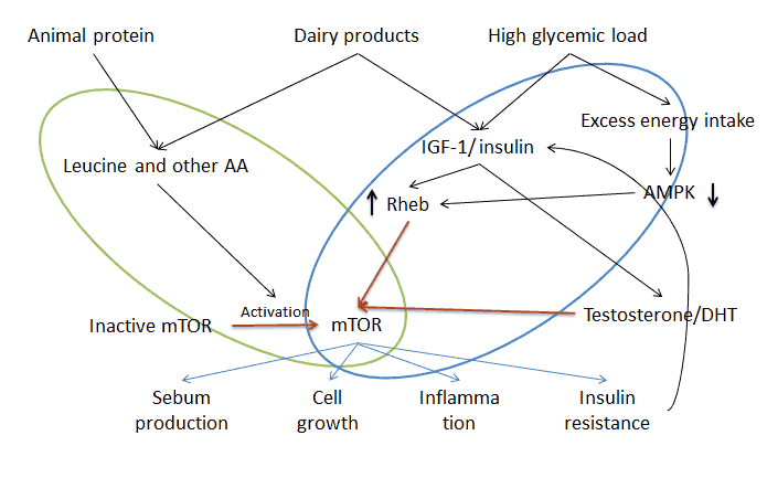 mTor signalling and acne