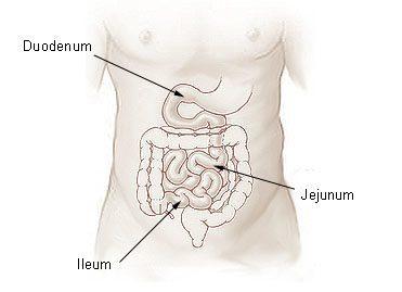 Illu_small_intestine
